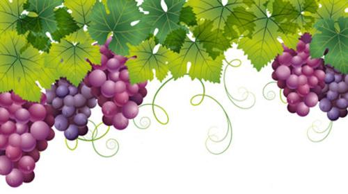 Leggenda dell'uva