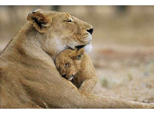 mamma leonessa
