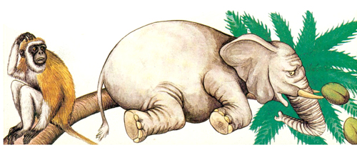 elefante_3
