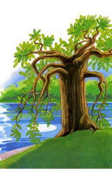 albero luna 3
