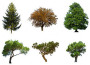 Gli alberi sempreverdi_leggenda