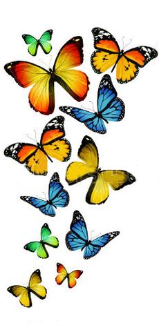 leggenda farfalle