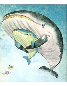 il piccolo balenottero