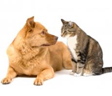 Cane e gatto1