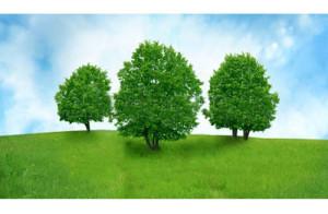 Leggenda tre alberi_favolefantasia.com