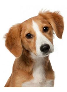 Il naso freddo del cane