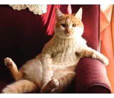 gatto in poltrona