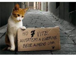 gatto_7 vite