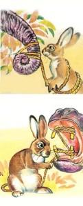 Coniglio furbo_4
