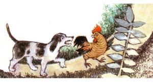 cane e gallo volpe
