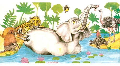 elefante_8